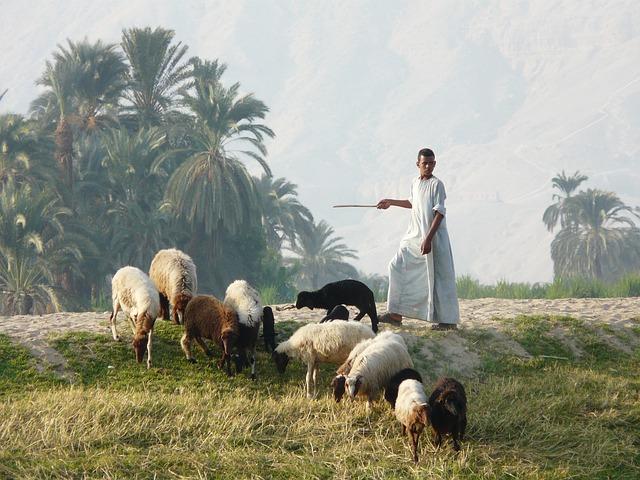 shepherd-1534713_640